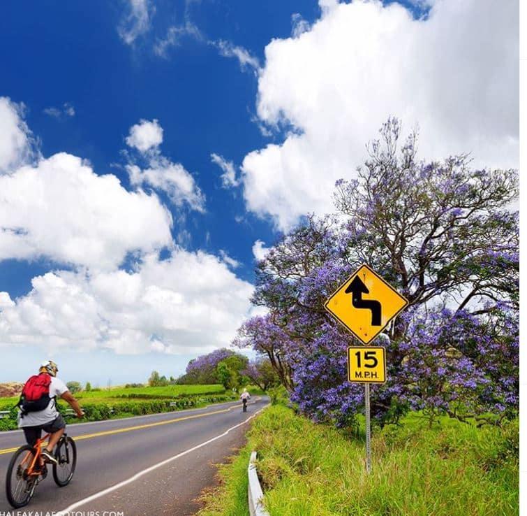 Haleakala Biking Company Promo image